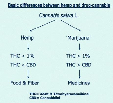Hemp-Cannabis